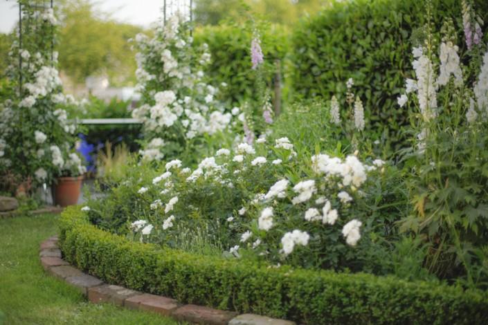 Garten Galante-Kölsch