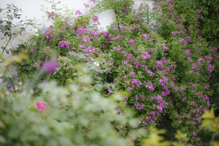 Garten Grussenmeyer